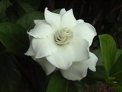 '09 タイの母の日.JPG