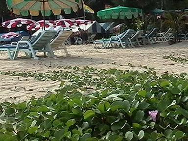 カロンビーチ右15a.JPG