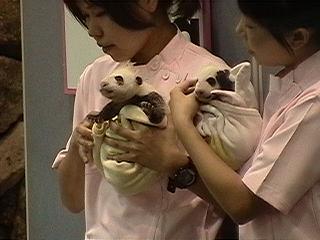 双子のパンダの赤ちゃんa.JPG