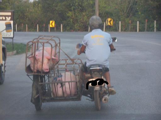 豚おりa.JPG