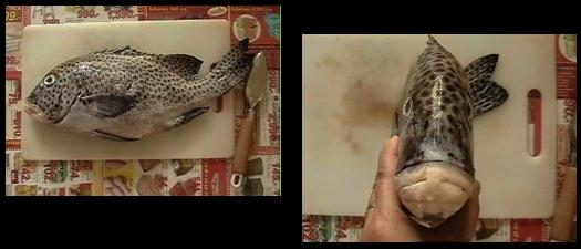 斑点模様の鯛1a,2a.JPG